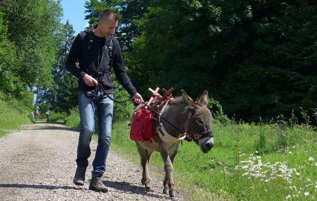 esel-trekking-heinade-tour