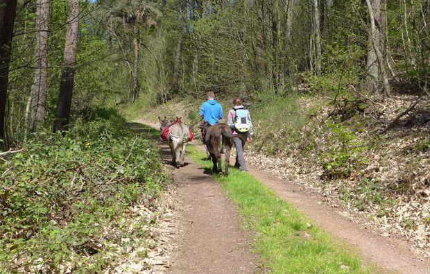 esel-trekking-heinade-waldwanderung