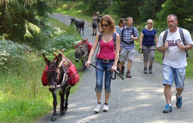 esel-trekking-heinade-wandern
