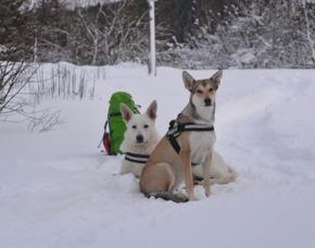 Schneeschuh-Wanderung Büren