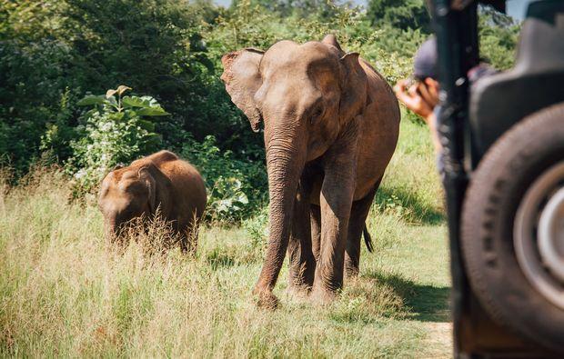 traumreise-safaripark-beekse-bergen-bustour