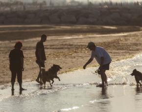 Urlaub mit Hund Cavallino