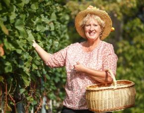 Weinbergwanderung mit Picknick mit Verkostung von 4 Weinen und 3 kalten Köstlichkeiten