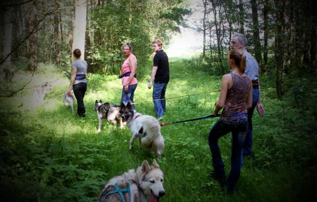 husky-trekking-twistringen-bg4