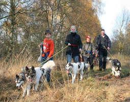 Husky-Trekking 3 Stunden