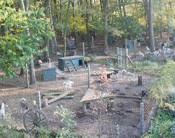 husky-trekking1