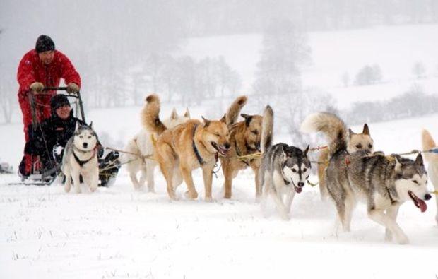 schlittenhunde-workshop-neuhof-hauswurz-fun