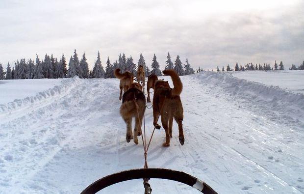 schlittenhunde-workshop-neuhof-hauswurz-hobby