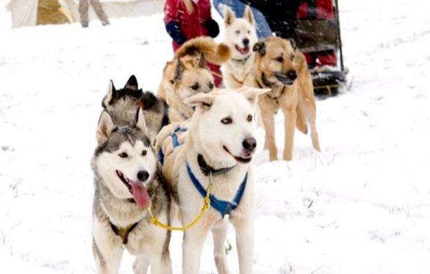schlittenhunde-workshop-neuhof-hauswurz-hunde