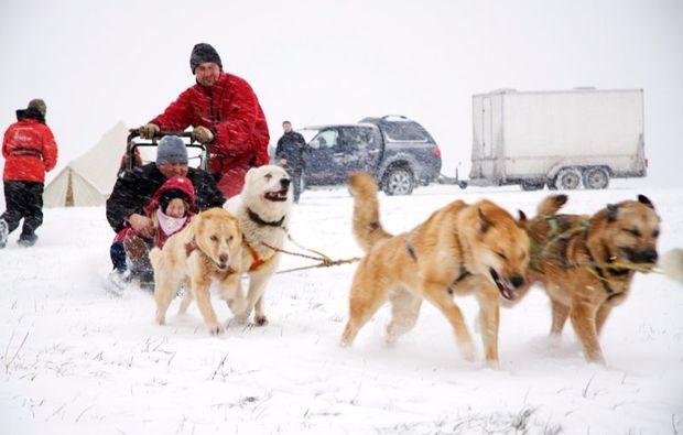 schlittenhunde-workshop-neuhof-hauswurz-passion