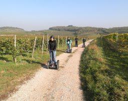Segway Tour Vogtsburg Weinberge-Tour - Ca. 2 Stunden