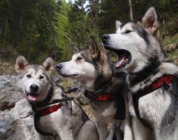 Husky-Wandertour (3 Tage) Wander-Tour - 3 Tage