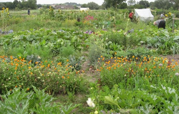 urban-gardening-duesseldorf-gemuesebeet