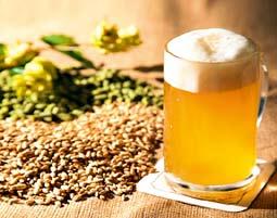 Braukurs mit Verkostung, Mittagessen & Brauereibesichtigung