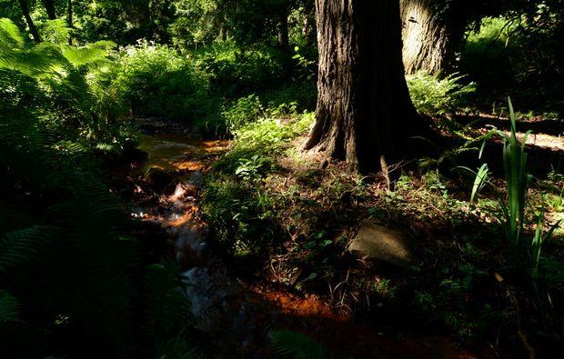 fotokurs-dortmund-forest
