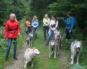 Husky-Familientag Familientag mit Huskies - 2 Erwachsene und bis zu 3 Kinder - Wandertour - 4-5 Stunden