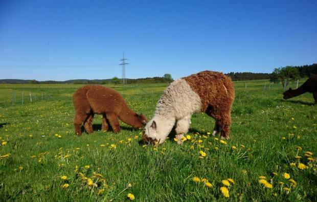 cube-sleeperoo-uebernachtung-kierspe-natur