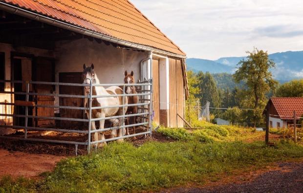 cube-uebernachtung-froehnd-pferde