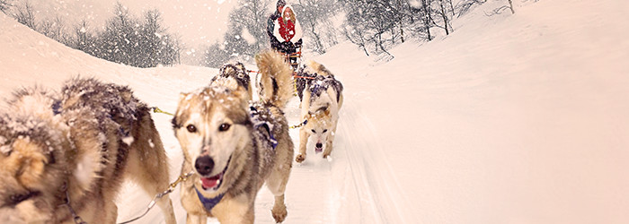 Husky-Abenteuer-Trip