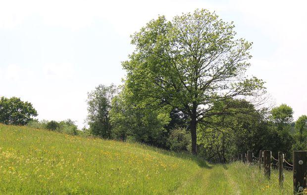 kraeuterwanderung-waldenbuch-natur