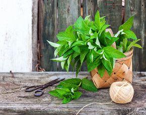Kräuterwanderung mit Sammlung verschiedener Pflanzen