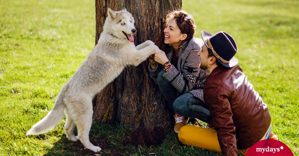 Urlaub mit Hund - Ferien mit Hund genießen | mydays