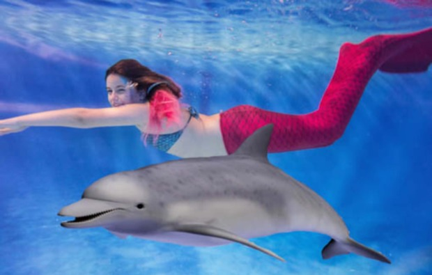 tauchkurse-dornstadt-delfin