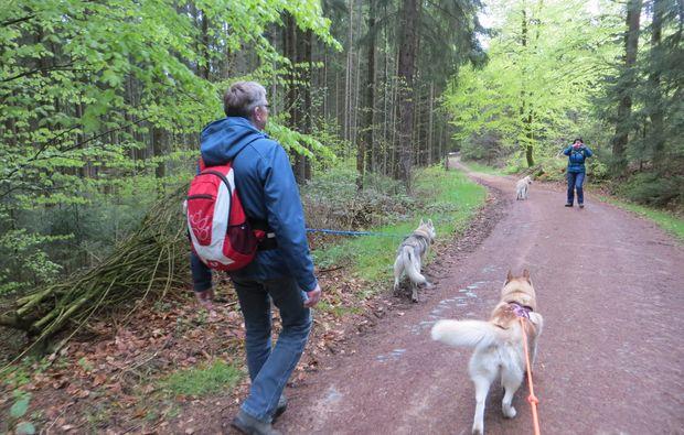 erlebnis-husky-trekking-kulz