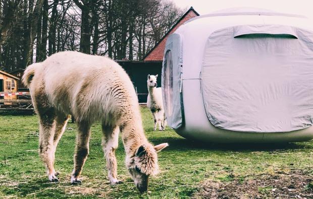 sleeperoo-lasbek-uebernachtung-cube