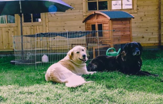 sleeperoo-lasbek-uebernachtung-hofhunde