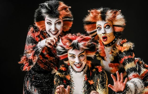 musical-dinner-strausberg-cats