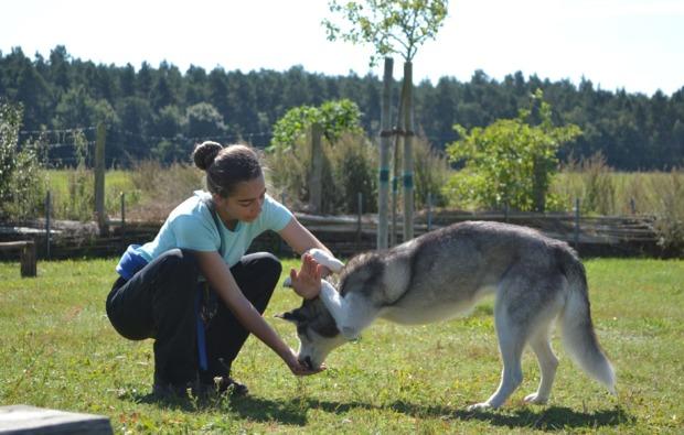 schlittenhunde-workshop-frankendorf-huskie