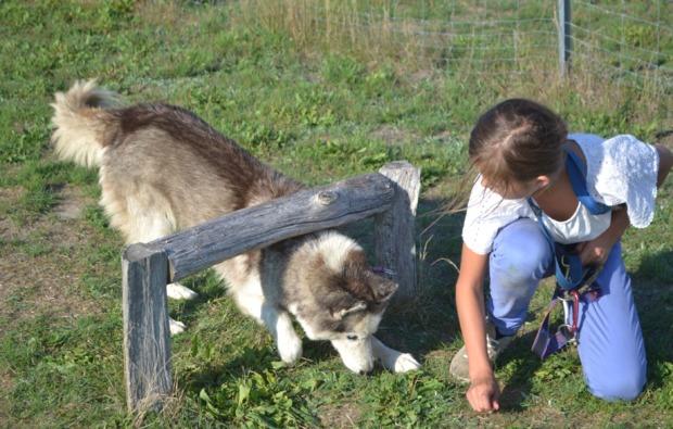 schlittenhunde-workshop-frankendorf-husky