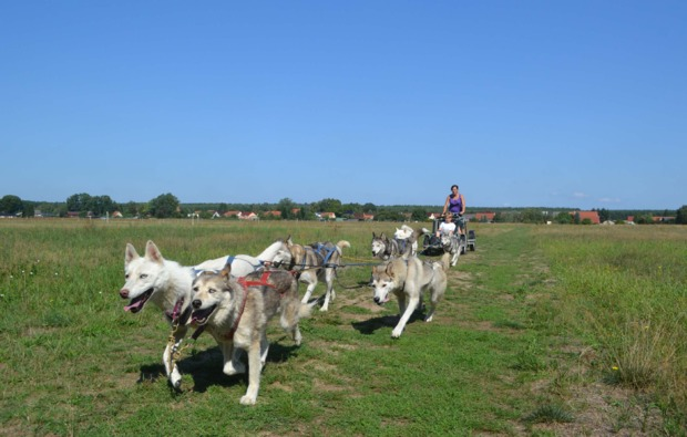 schlittenhunde-workshop-frankendorf-musher-kurs