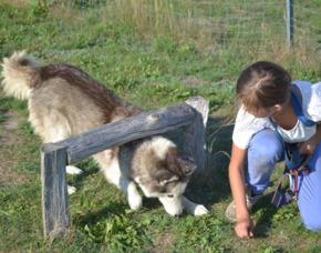 Schlittenhunde-Workshop