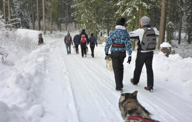 husky-trekking-clausthal-zellerfeld-bg4