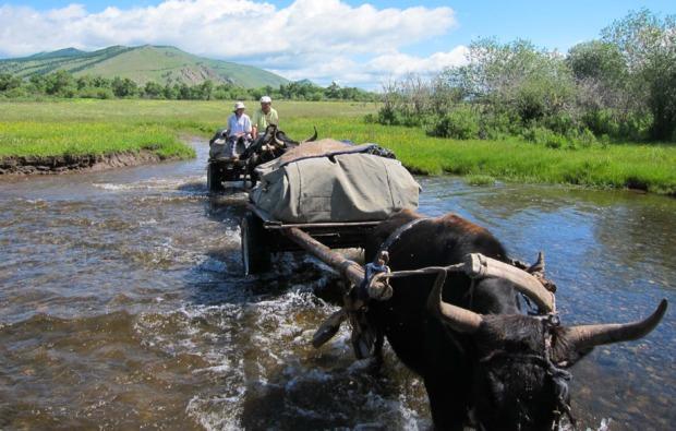 erlebnisreise-mongolei-fuer-2-8-tage-bg5
