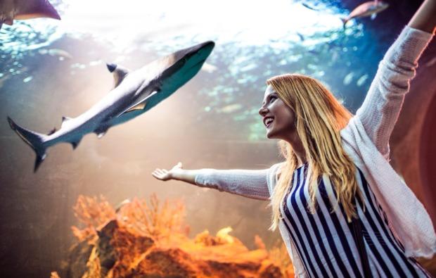 traumtag-fuer-zwei-muenchen-aquarium