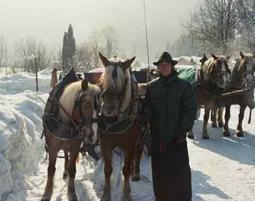 pferdeschlittenfahrt-golling-an-der-salzach-kutscher