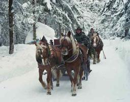 Pferdeschlittenfahrt ca. 1,5 Stunden