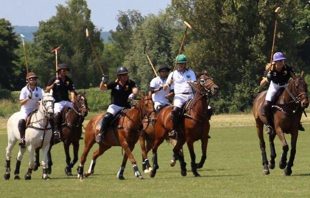 polo-schnupperkurs-frankfurt-sport