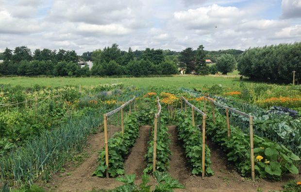 urban-gardening-dortmund-anbau