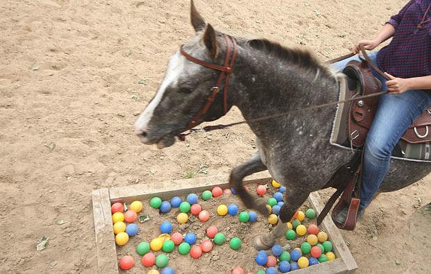 kinder-pferde-familie