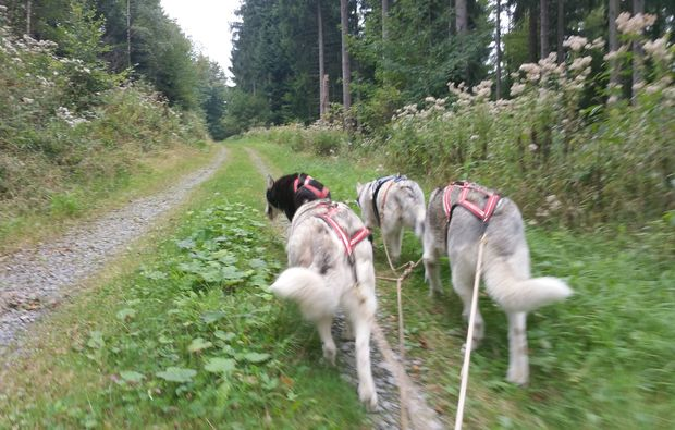 husky-tag-bad-herrenalb