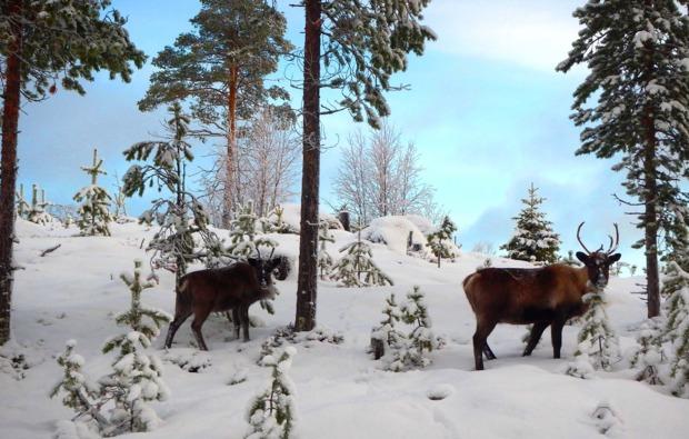 husky-asele-abenteuer-trip-natur