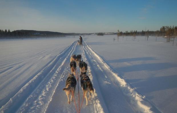 husky-asele-abenteuer-trip-schlittenhunde