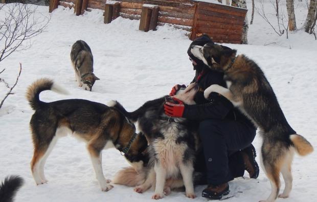 husky-asele-abenteuer-trip-tierisch