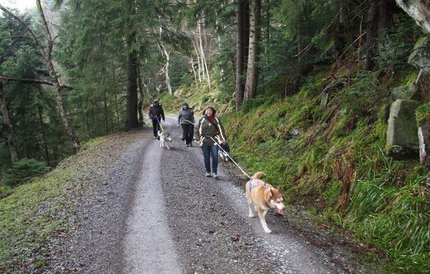 husky-trekking-bad-herrenalb-freizeit