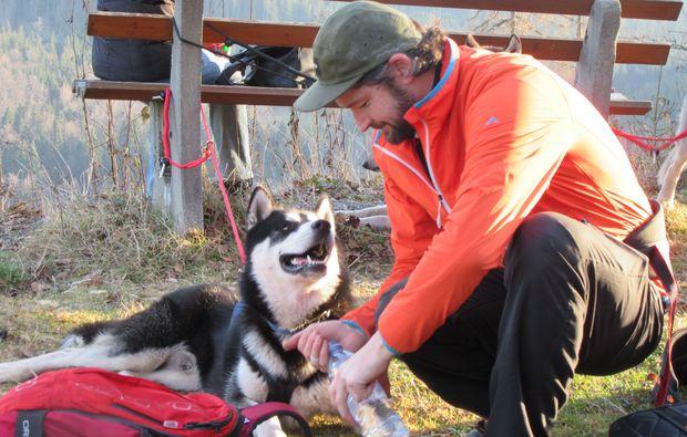 husky-trekking-bad-herrenalb-sport