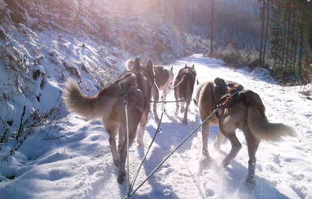 husky-trekking-bad-herrenalb-training